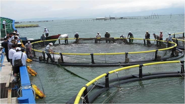 Aquaculture Circular Fish Farming Cage