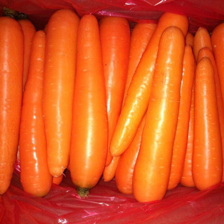 Fresh Carrot New Crop Harvest