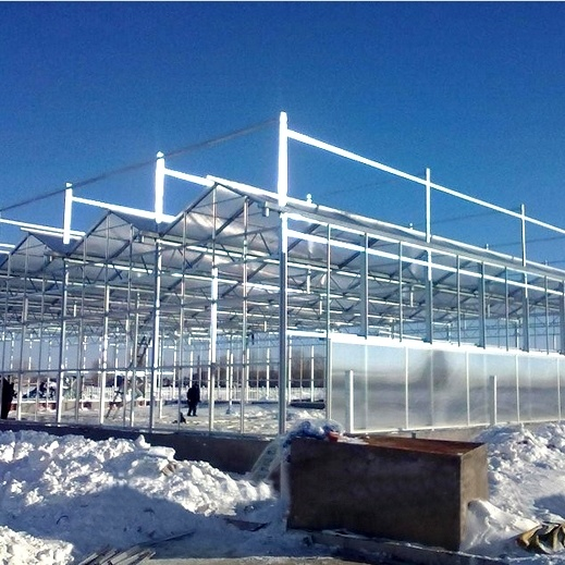 Newest Multi-Span Glass Greenhouse for Sale