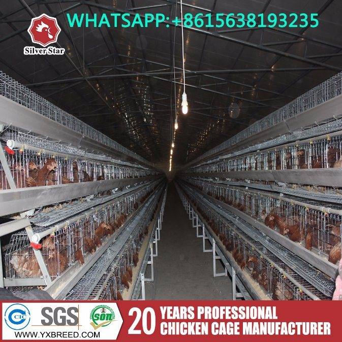 Poultry Farm Used a Type Ladder Laying Hen Chicken Cages