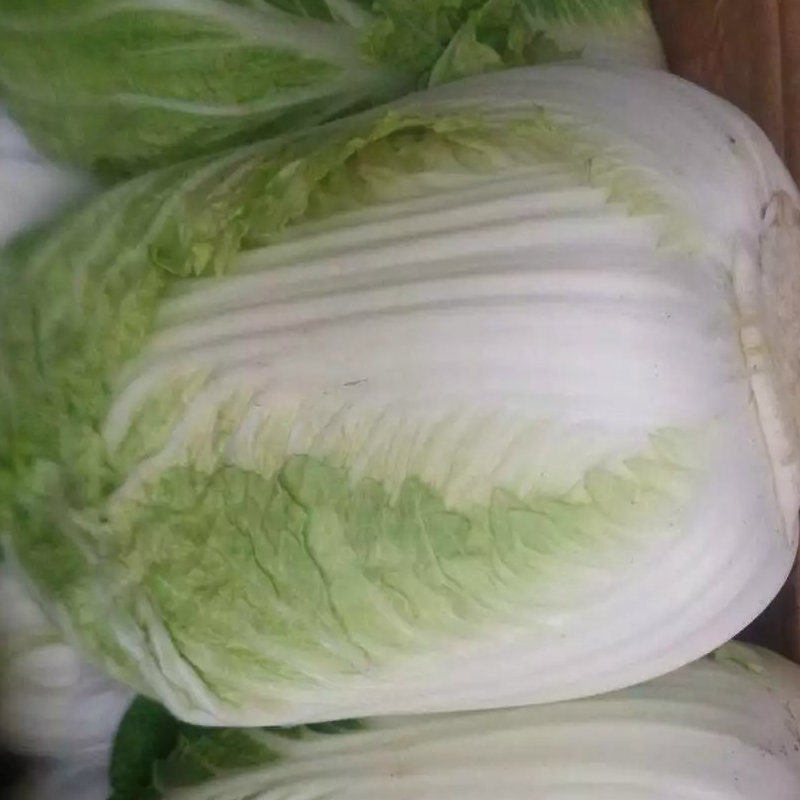 Good Quality of Fresh Cabbage From China
