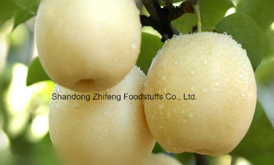 Chinese Fresh Ya Pear with Good Price
