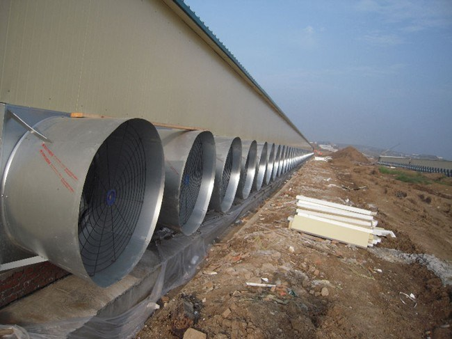 Cone Fan for Poultry (OFS)