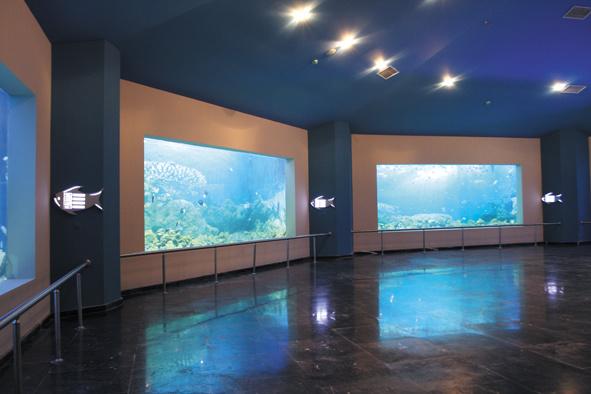 China Large Custom Acrylic Aquarium Photos Pictures