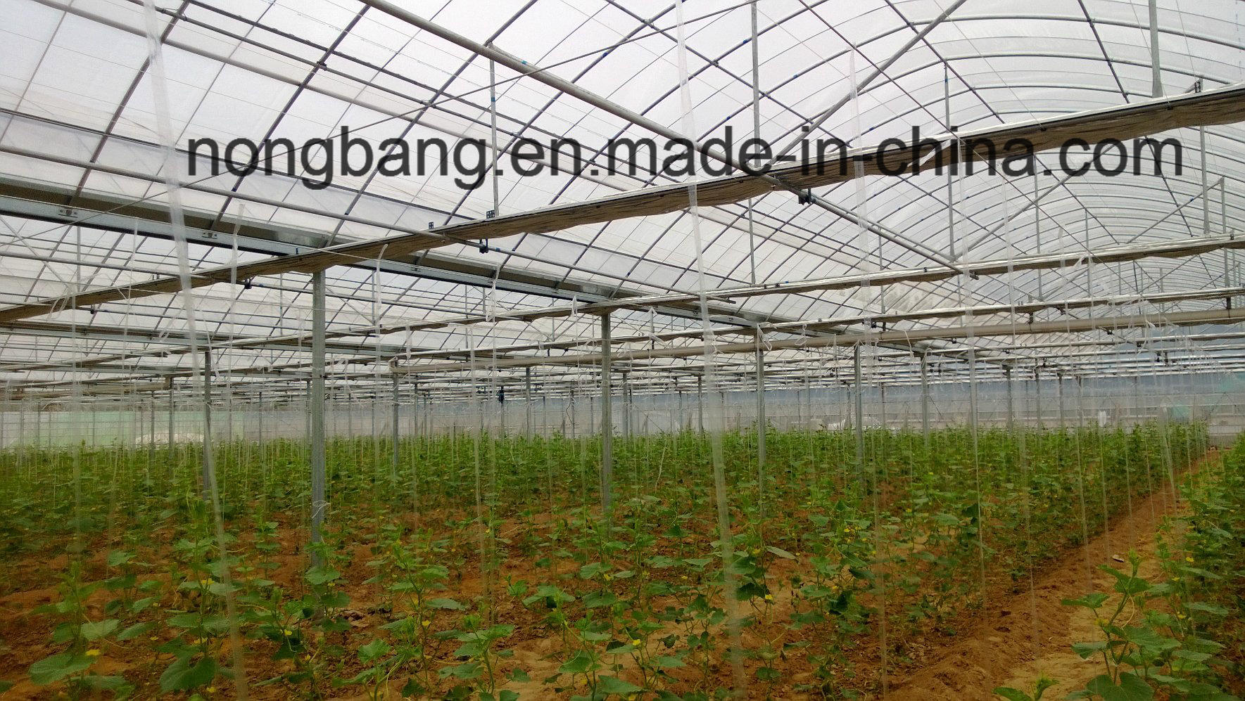 The Cheapest China XL Agricultural, Commercial Plastic Greenhouse