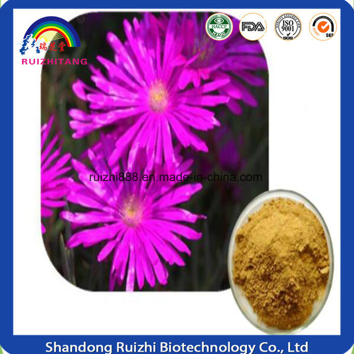 Natural Plant Extraction 98% Mesembrine Ruizhi Extract