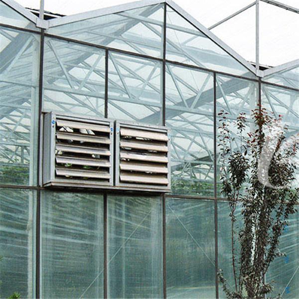 Venlo Greenhouse / Venlo Type Glass Greenhouse / Glass Greenhouse