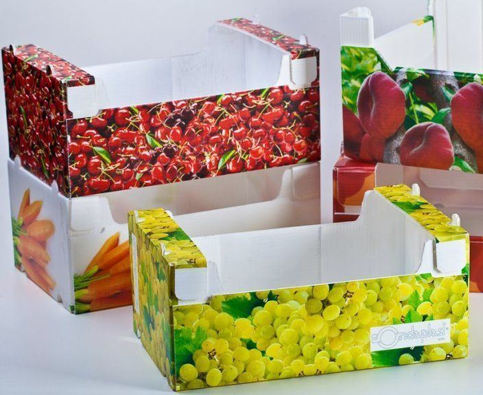 PP/PE Fruits & Vegetables Box/Container