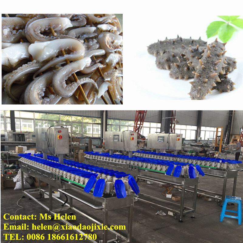 Weight Grader/ Weighing Classifier/ Weight Sorter Machine for Shrimp and Seafood