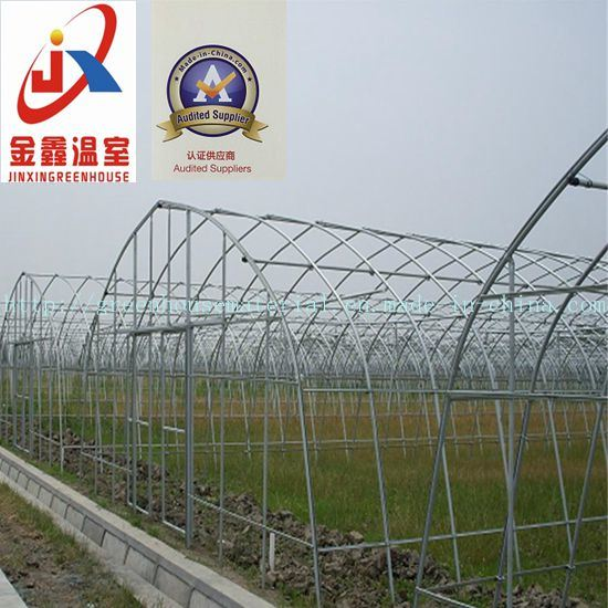 Single-Span Tunnel Greenhouse for Vegetable Grower with Steel Structure