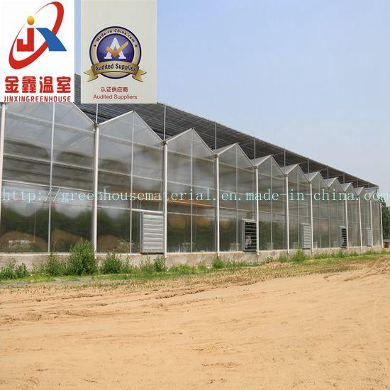 Multi Span Polycarbonate Sheet Greenhouse