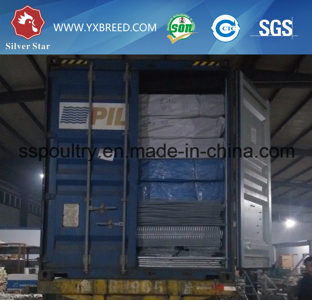 Wire Mesh Automatic H Type Broiler Cage