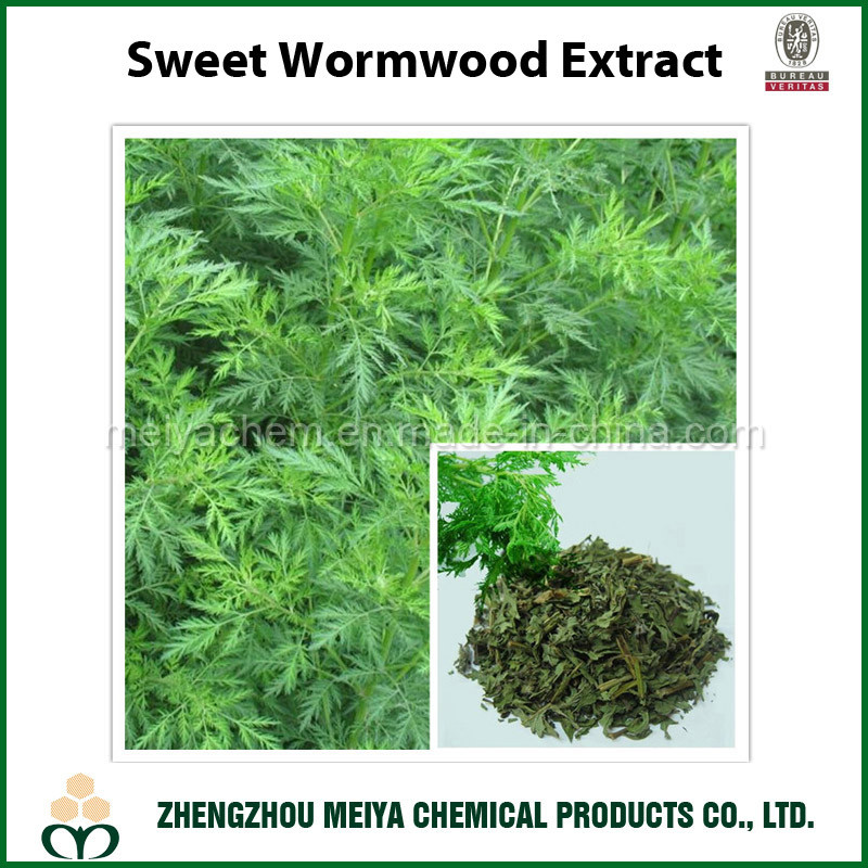 Sweet Wormwood Powder Extract with Artemisinine 99% HPLC
