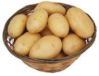 Holland Potato for Mideast