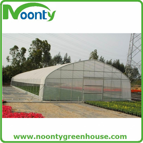 Economical Single Tunnel Plastic Film Agriculture Greenhouse