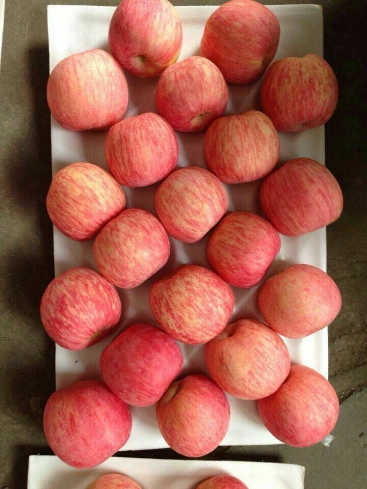 New Crop Fresh FUJI Apple (150-198)