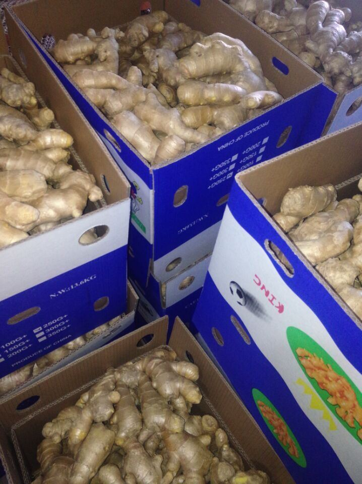 Exported Standard Quality of Air Dry Ginger