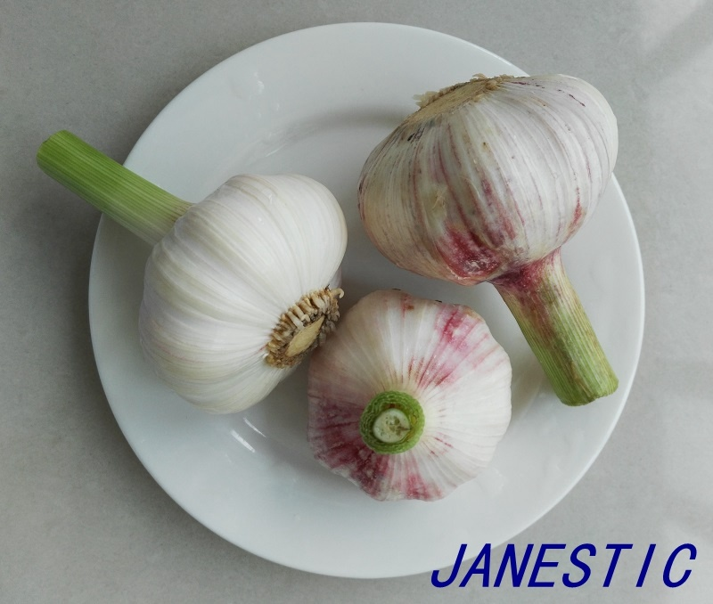 2017 New Crop Fresh Normal White Garlic From Shandong