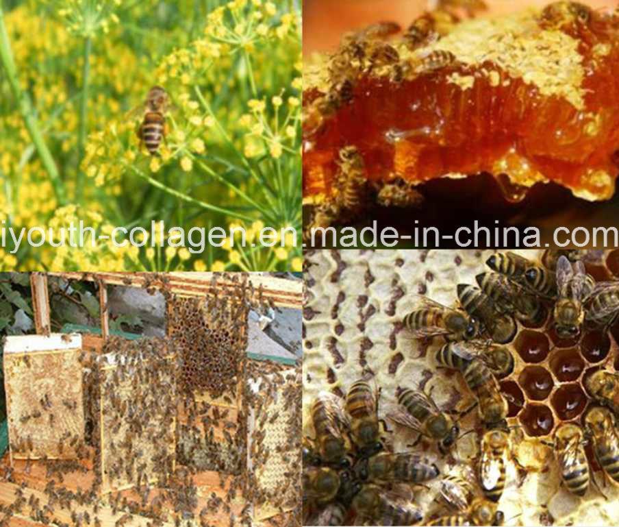 Top Queen of Honey,Pure Fennel Honey Nest, Most Fragrance,Rare Precious No Antibiotics,No Pesticides,No Pathogenic Bacteria,Nourish Internal Organs,Prolong Life