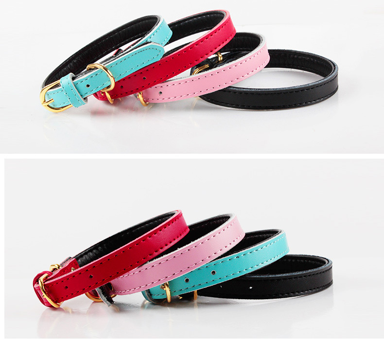 Pet Product Dog Cat Puppy Colorful Collar (C008)