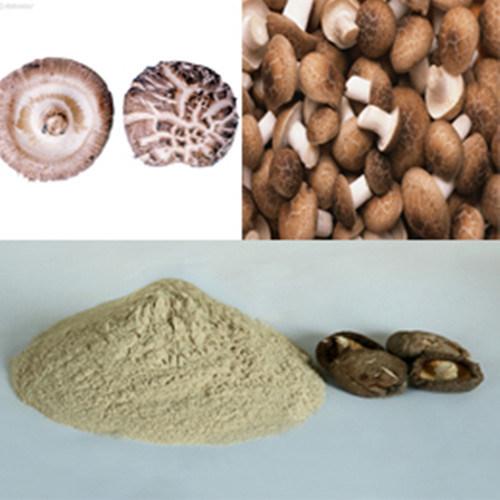 Wild Shitake Mushroom P. E. /50% Polysaccharide