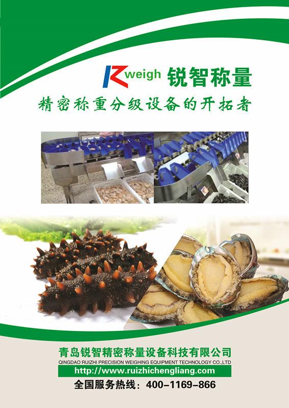 Sea Cucumber Weight Sorter Grader Food Machinery