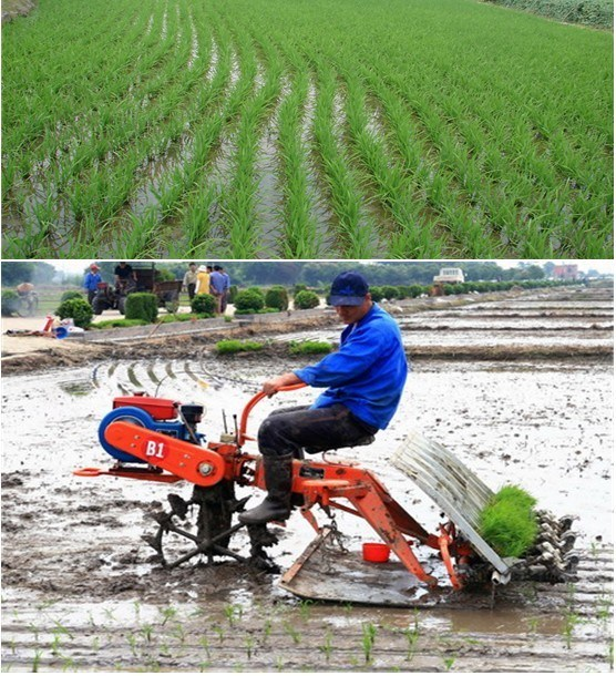 [Image: Paddy-Planter-Portable-Rice-Paddy-Seeder-Machinery.jpg]