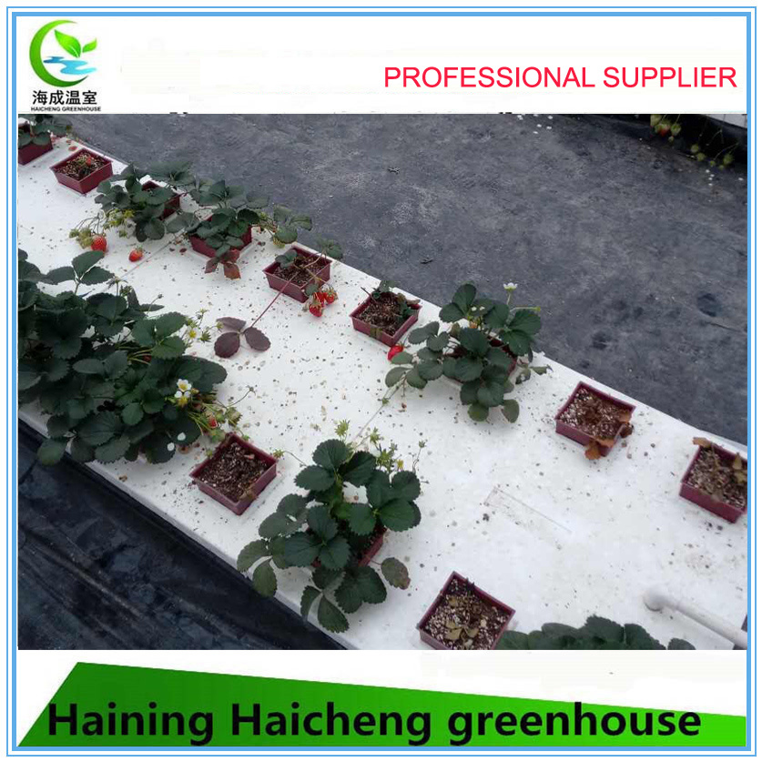 Hydroponic System for Agriculture Greenhouse