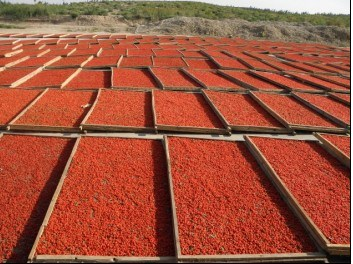 Ningxia Dried Goji Berry (Wolfberry)