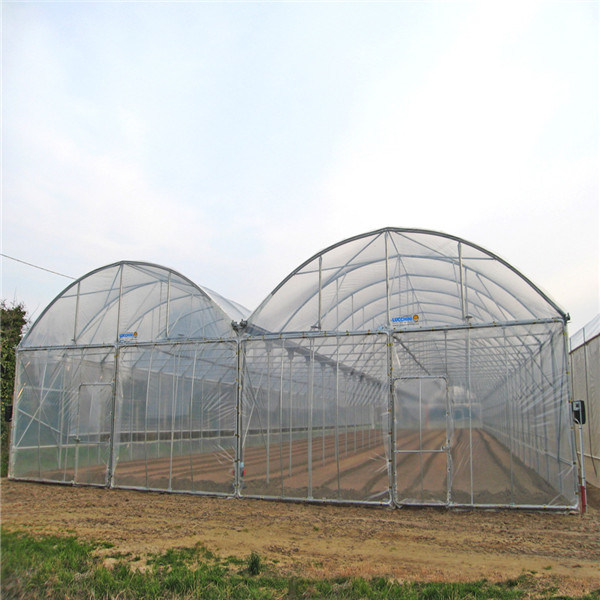 Cheapest Galvanized Steel Tunnel Greenhouse with Plastic Film and Fly Net