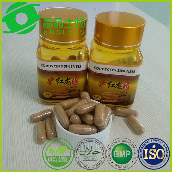 Diabetes Treament Capsule Herb Yarsagumba Extract