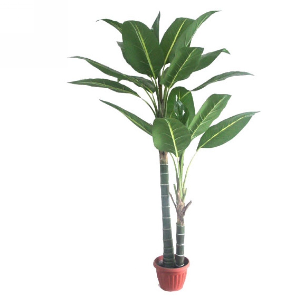 u555u images house plants tree