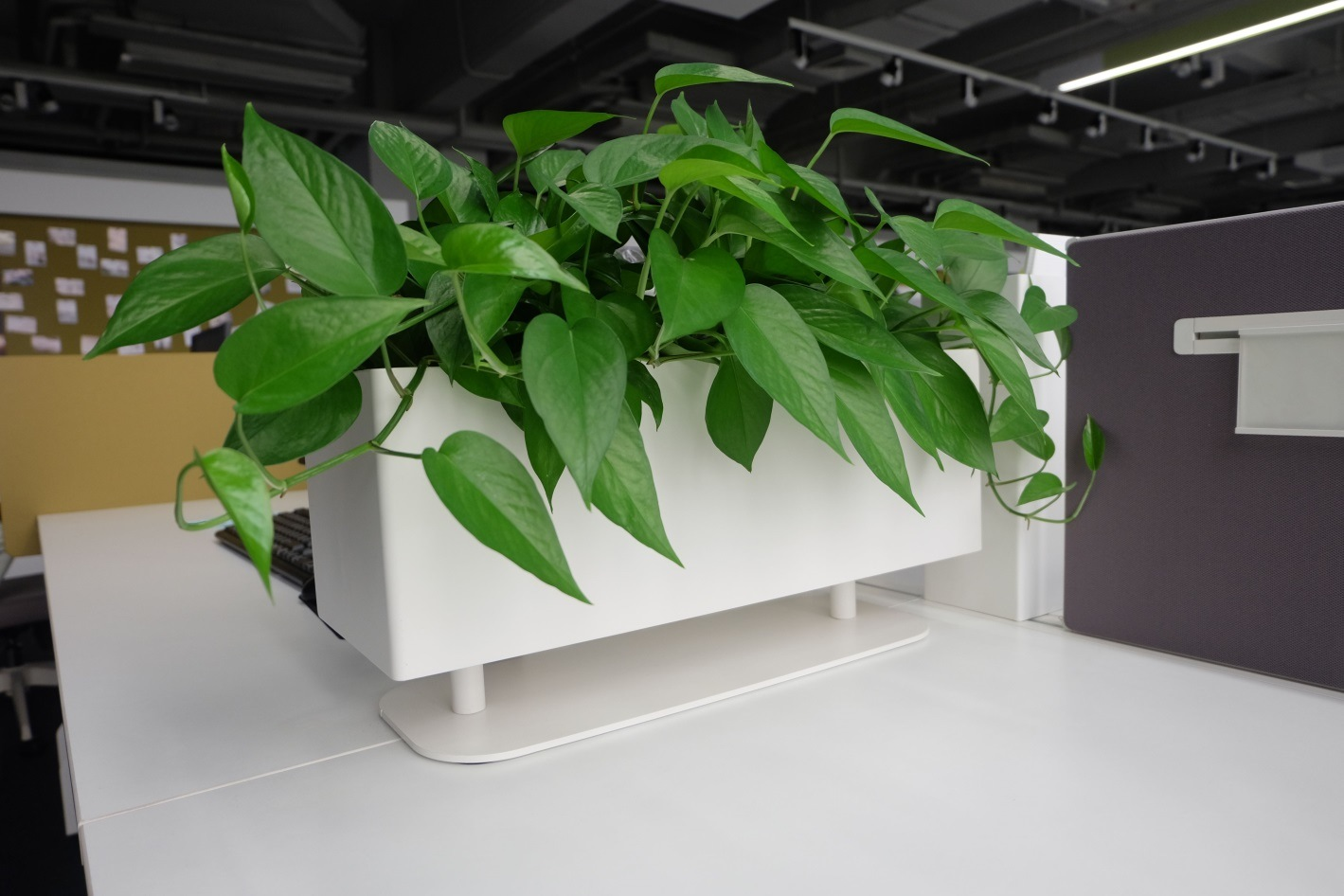 Uispair 100% Steel Square Desktop Flower Pot Garden Planter for Office Garden Hotel Decoration
