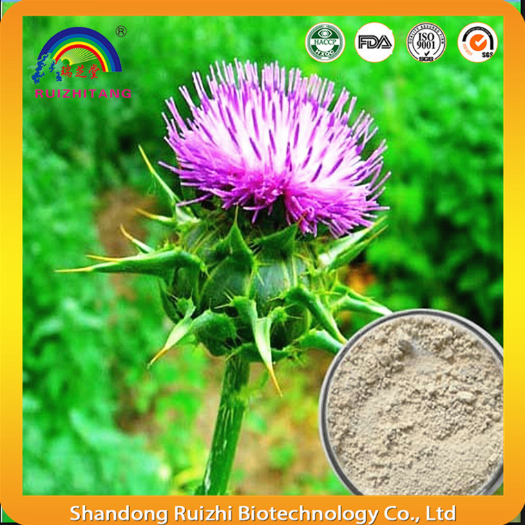 Plant Extract Milk Thistle Extract Powder