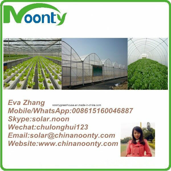 Farm Hydroponics Growing System for Tomato, Lerruce, Cucumber,Eggplant, Pepper,Herbs,Strawberry Planting with Commercial Tunnel and Multi-Span Gothic Greenhouse