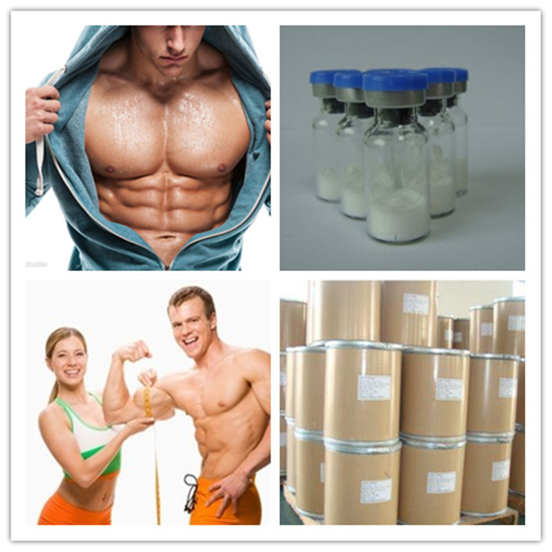 Sarms Gw-501516/Cardarine Powder with High Quality for Musclebuilder