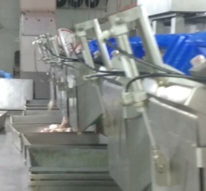 Food Poultry Prawn Weight Sorter Grading Machine