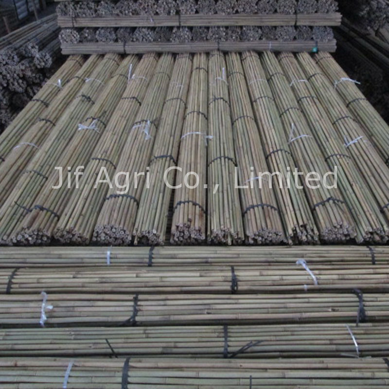 Nature Dry Straight Tonkin Bamboo Fencing