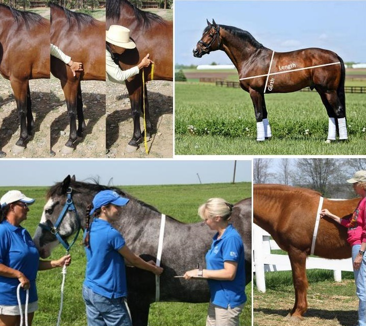 High Precision Animal Weight Tape Measure for Horses