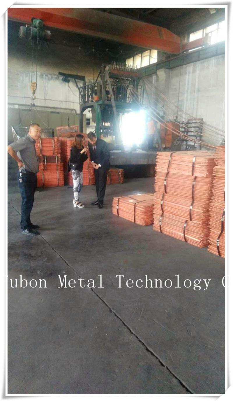 Copper Cathode and Electrolytic Copper /Copper (Cu) Min% 99.99%-99.97% Min