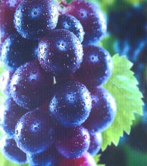 PP/PE Fruit Box