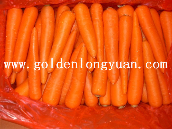 Fresh Carrot Hot Sale From China
