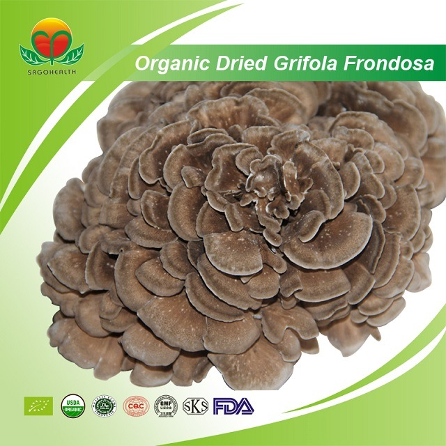 Manufacturer Supplier Organic Dried Grifola Frondosa