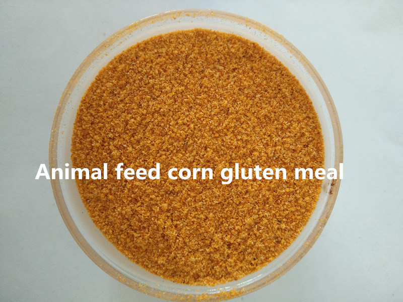 Corn Gluten Meal (protein 60%)