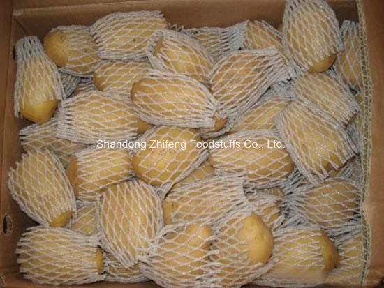 High Quality Exporting Potato