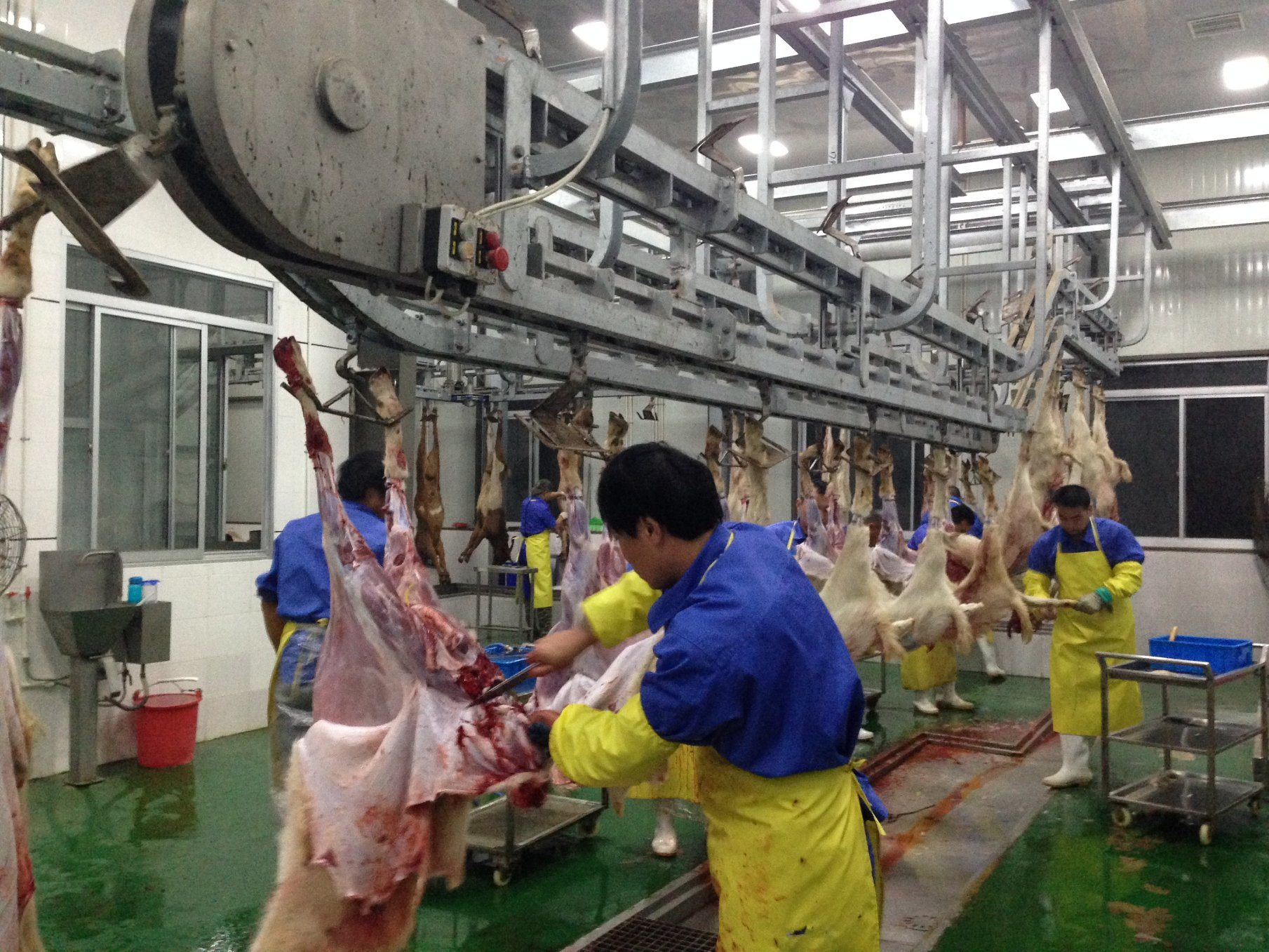Sheep Slaughter Line Made in China
