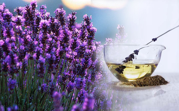 French Lavender Essential Oil for Health & Beauty