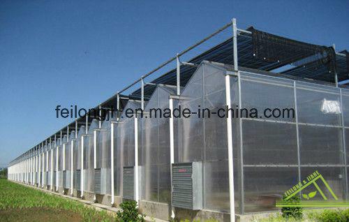 Venlo PC Greenhouse