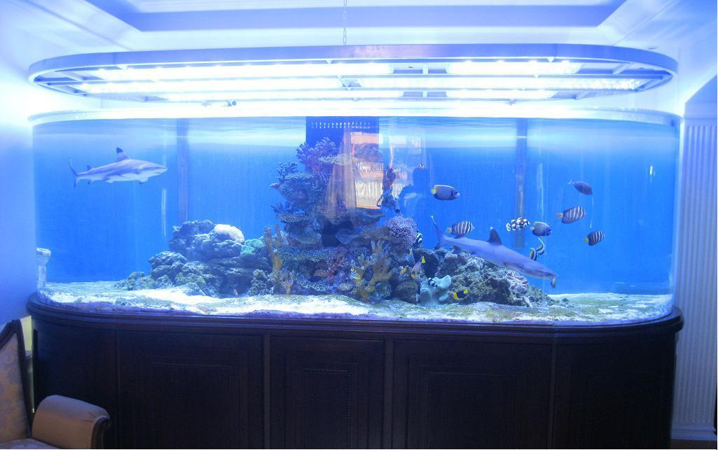 china acrylic fish tank photos pictures made in