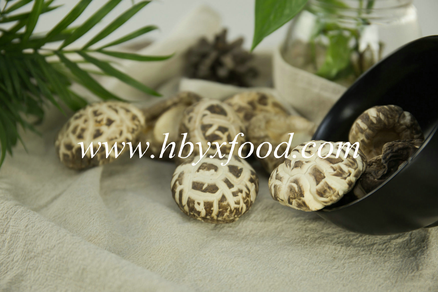 Dehydrated White Flower Mushroom/Dried Vegetable